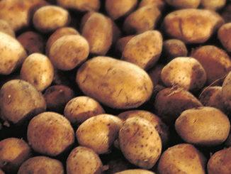 Potato Lover's Month